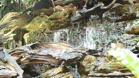 Lush green tropical garden waterfall stock video footage