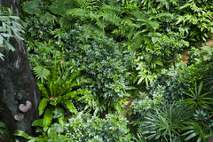 Lush green tropical jungle Royalty Free Stock Photography