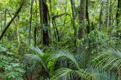 Lush Green Tropical Jungle. A photo of lush green tropical jungle taken from the North Island in New Zealand Royalty Free Stock Image