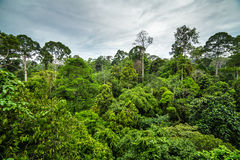Lush green tropical rainforest. In Borneo Stock Photos