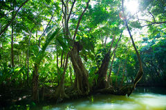 Lush green tropical vegetation alongside water Royalty Free Stock Image