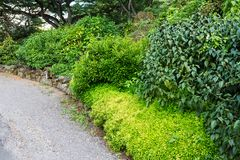 Lush green tropical vegetation bordering a path. Lush green tropical vegetation bordering a footpath through a park on Oahu, Hawaii in a scenic background stock photos