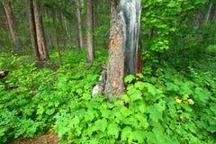 Lush Vegetation Glacier National Park Stock Photos