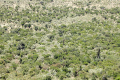 Lush green vegetation in the great rift valley of Kenya Stock Photos