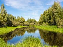Lush green vegetation. Near the river in summer Royalty Free Stock Photo