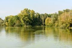 Lush green vegetation on shores of Mincio river, Mantua, Italy. Lush green thick vegetation on shores of Mincio river, shot in bright autumn sun light near stock photography