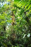 Lush green vegetation in tropical Amazon rain forest. Of Colombia thick vegetation of jungle canopy stock photos