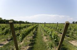 Lush Green Winery Royalty Free Stock Photos