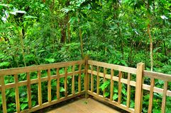 Lush greenery behind wooden fence. In Bukit Timah Nature Reserve, Singapore Stock Images