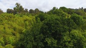 Lush greenery covering hillsides of park, national sanctuary, preserving nature. Stock footage stock video