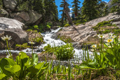 Lush greenery and mountain creek Colorado Rockies Royalty Free Stock Image