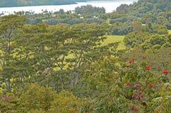 Lush Greenery off Kuhio Highway near Princeville Royalty Free Stock Photo