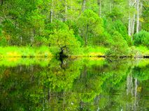 Lush greenery reflection in water surface of forest lake.  royalty free stock images