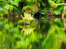 Lush greenery reflection in water surface of premeval forest lake, Boubin, Sumava Mountains, Czech Republic Royalty Free Stock Images