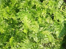 Lush greenery Royalty Free Stock Photography