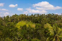 Lush greenery in Ubud, Bali Royalty Free Stock Photography