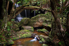 The lush Grotto at Fitzroy Falls Australia Royalty Free Stock Photos