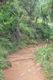 Lush Hiking Trail. Partial view of the Kalalau Hiking Trail, on Kauai, with lush vegetation Stock Photos
