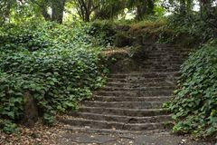 Lush ivy and foliage line the Short Cut stairs in Berkeley, CA royalty free stock photos
