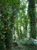 Lush jungle like vegetation Maui Hawaii Stock Photo