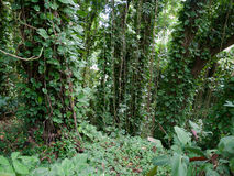 Lush jungle like vegetation Maui Hawaii Royalty Free Stock Photos