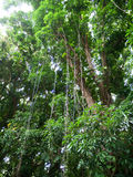 Lush jungle like vegetation Maui Hawaii Stock Image