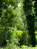 Lush jungle like vegetation Maui Hawaii Royalty Free Stock Images