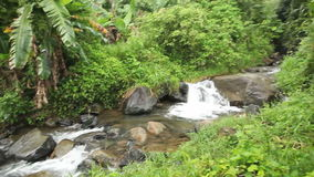 Lush Jungle Stream Pan. Pan shot of a lush jungle stream stock video footage