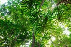 Lush jungle vegetation Stock Photography