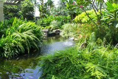 Free Lush Koi Pond Royalty Free Stock Photos - 32982018