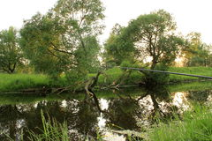 Lush landscape Royalty Free Stock Image