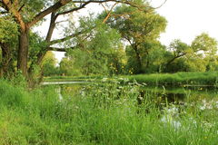 Lush landscape Royalty Free Stock Images