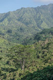 Lush Landscape. Lush, tropical, mountains, tress and other tropical plants, along the Kuilua Trail, on Kauai Stock Image