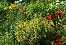 Lush landscaped garden. With flowerbed and colorful plants Stock Images