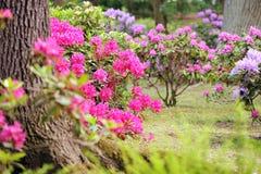 Lush landscaped garden Stock Image