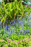 Lush landscaped garden with flowerbed Stock Photography