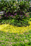 Lush landscaped garden with flowerbed Stock Images