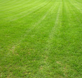 Lush lawn. Lush, green lawn freshly mowed and manicured Royalty Free Stock Photos