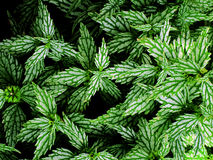 Lush Leafy Green Plants Stock Images