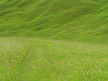 Lush green meadow in alpine upland royalty free stock photography
