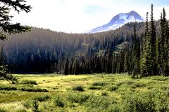 The Meadow stock photography