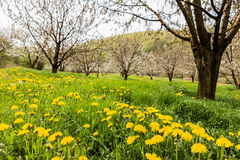 Lush meadow with bloomy flowers and trees Stock Image