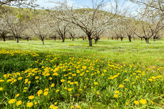 Lush meadow with flowers and trees Royalty Free Stock Photos