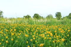 Lush meadow Stock Images