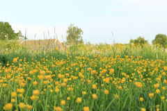 Lush meadow Stock Image