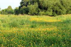 Lush meadow Stock Photos