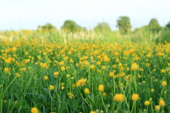 Lush meadow Royalty Free Stock Image