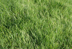 Lush Meadow Grass Stock Photos