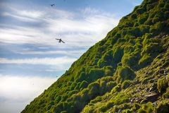 lush meadows are formed by colony of sea birds Royalty Free Stock Photos