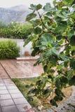 Lush Mediterranean garden Stock Photo